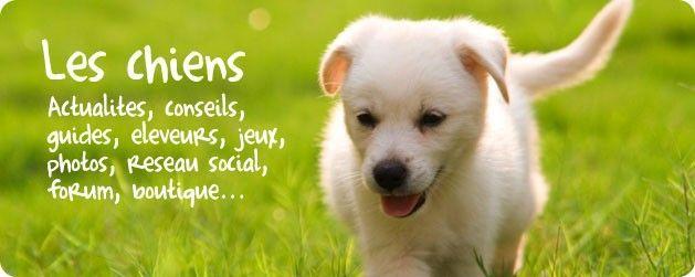 Tout sur les chiens