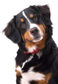 chien interrogatif