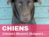 Guide chiens