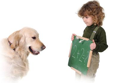Testez le Q.I. de votre chien