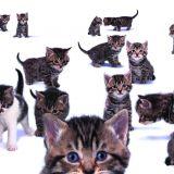 Êtes-vous prêt à adopter un chat ?