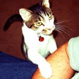 Test : Mon chat est-il trop gâté ?