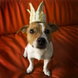Test : Mon chien se prend-il pour le chef ?