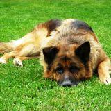 Test : Mon chien s'ennuie ?