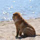 Mon chien est-il plutôt mer, montagne ou maison ?