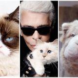 Test : Quel animal célèbre êtes-vous ?