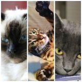 Quelle race de chat êtes-vous ?