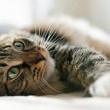 Test : Quel animal auriez-vous été dans une autre vie ?