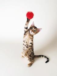 forme sante chat