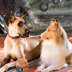 test marmaduke film chien de race