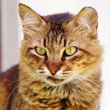 Quizz : Connaissez-vous les plus incroyables records détenus par les chats ?