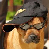 Quizz : connaissez-vous bien les dangers de l'été pour les animaux ?