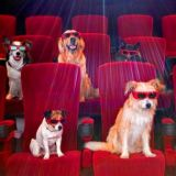 Quizz : Les animaux qui ont marqué le cinéma