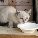 Quizz : Savez-vous quels aliments sont dangereux pour les chats ?
