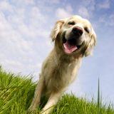 Le chien en 10 questions