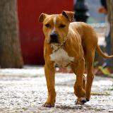 Quizz : Connaissez-vous bien les lois concernant les chiens ?