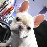 Quizz chien : connaissez-vous les tendances clés ?