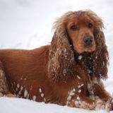 Quizz : Savez-vous correctement transporter votre chien lorsque vous voyagez ?