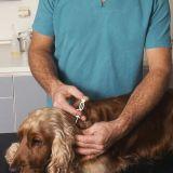 Quizz : Savez-vous vermifuger votre chien ?