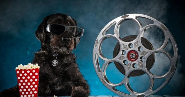 quizz cannes animaux films
