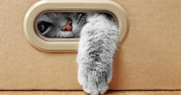 decouvrir chat