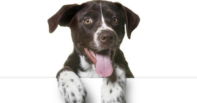 les capacités ches chiens