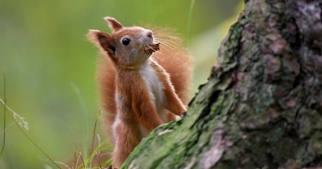 quizz écureuil