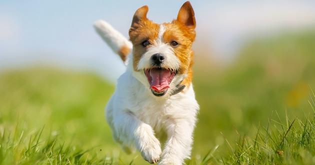 Angie de Secret Story et son chien Chihuahua
