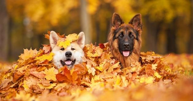 races chiens