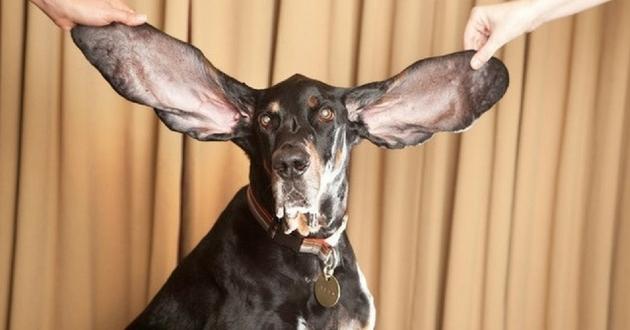 Les records de chien