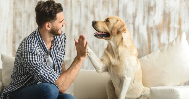 decouvrir chien