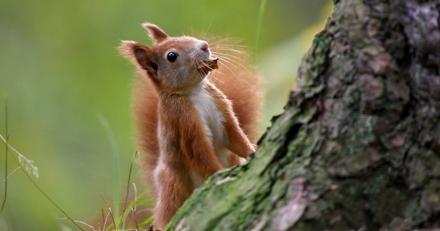 Quizz : connaissez-vous les écureuils ?