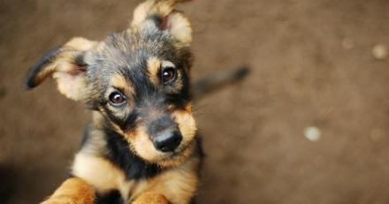 Quizz : Connaissez-vous les chiens les plus populaires du web ?