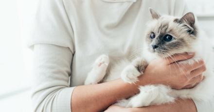 Quizz : Connaissez-vous les chats les plus célèbres du web ?