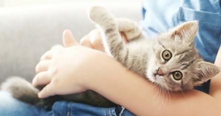 Quizz : Savez-vous décrypter le langage du chat?