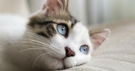 Quizz : Votre chat est-il un vrai chat ?