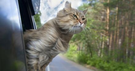Quizz : Savez-vous correctement transporter votre chat lorsque vous voyagez ?