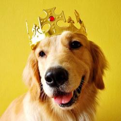 chien roi