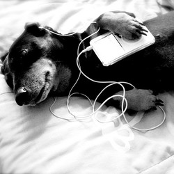 chansons chiens chats animaux