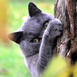 comment jouer avec son chat quizz