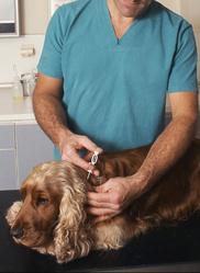 vacciner vermifuger chien