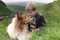 Comment se nomme ce superbe Colley, devenu certainement l'un des chiens les plus célèbres au monde ?
