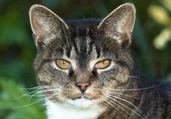 Le chat le plus vieux du monde a vécu jusqu'à :