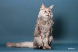 Combien mesure la queue de chat domestique la plus longue du monde ?