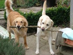 Votre chien adore plus que tout les bâtons