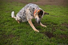 Votre chien enterre son os