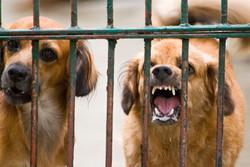 Votre chien n'apprécie pas spécialement le facteur