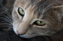 Votre chat sait quel regard vous fera remplir sa gamelle ?
