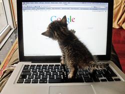 Votre chat n'a pas compris qu'un clavier n'était pas un panier ?