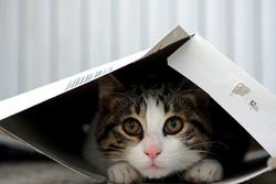 Votre chat adore se cacher dans des boîtes ?